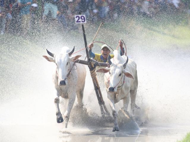 The biggest race festival in Mekong Delta